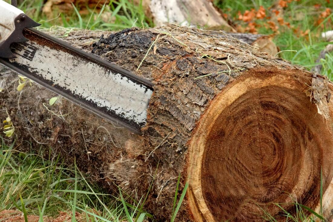 This is a picture of a chainsaw cutting a tree stump