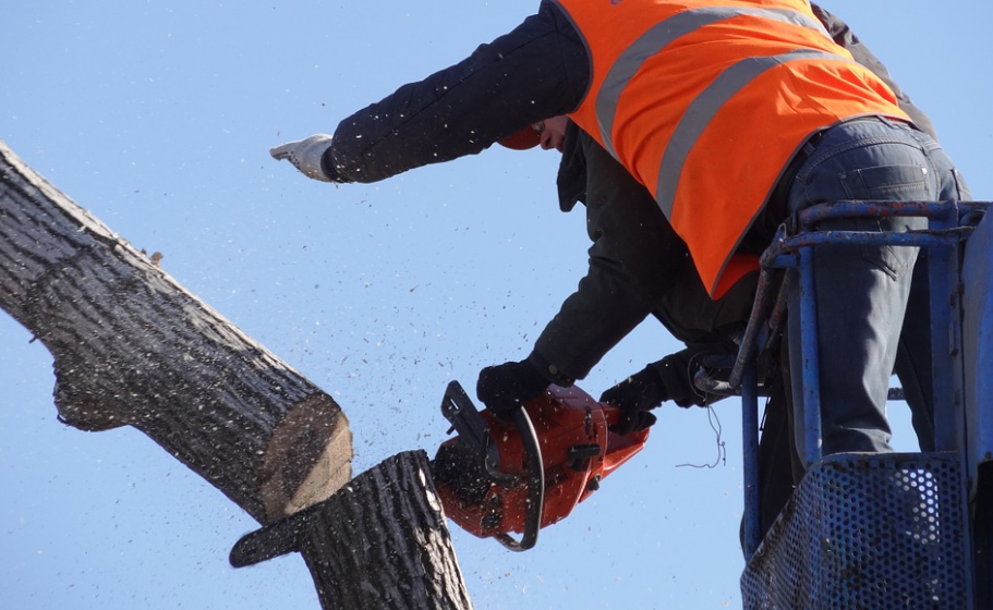 Guy in Folsom, California performing some tree cutting with a chainsaw